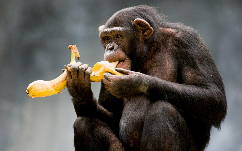 percezione dei colori - scimmia
