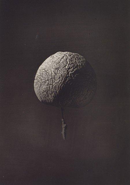 Wrinkled apple Nasmyth | fotografare la luna